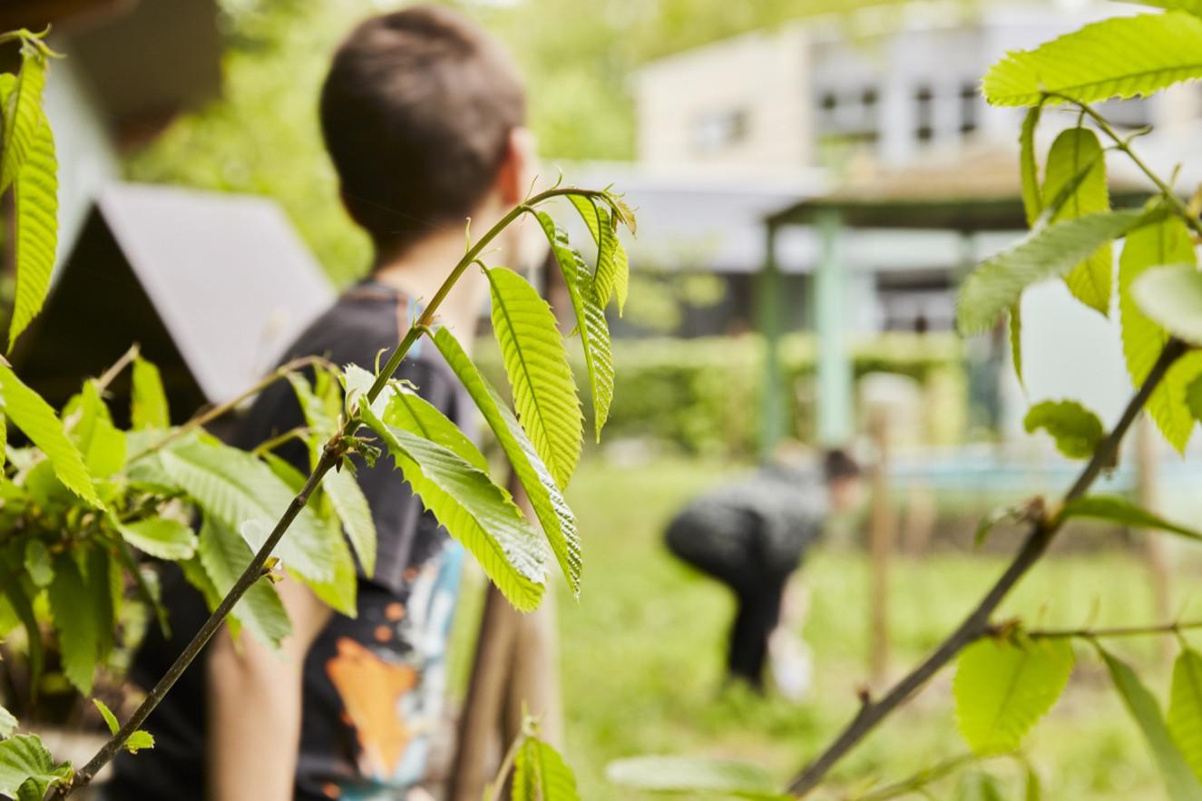 Close-up van plant met op achtergrond met twee jongens in de tuin