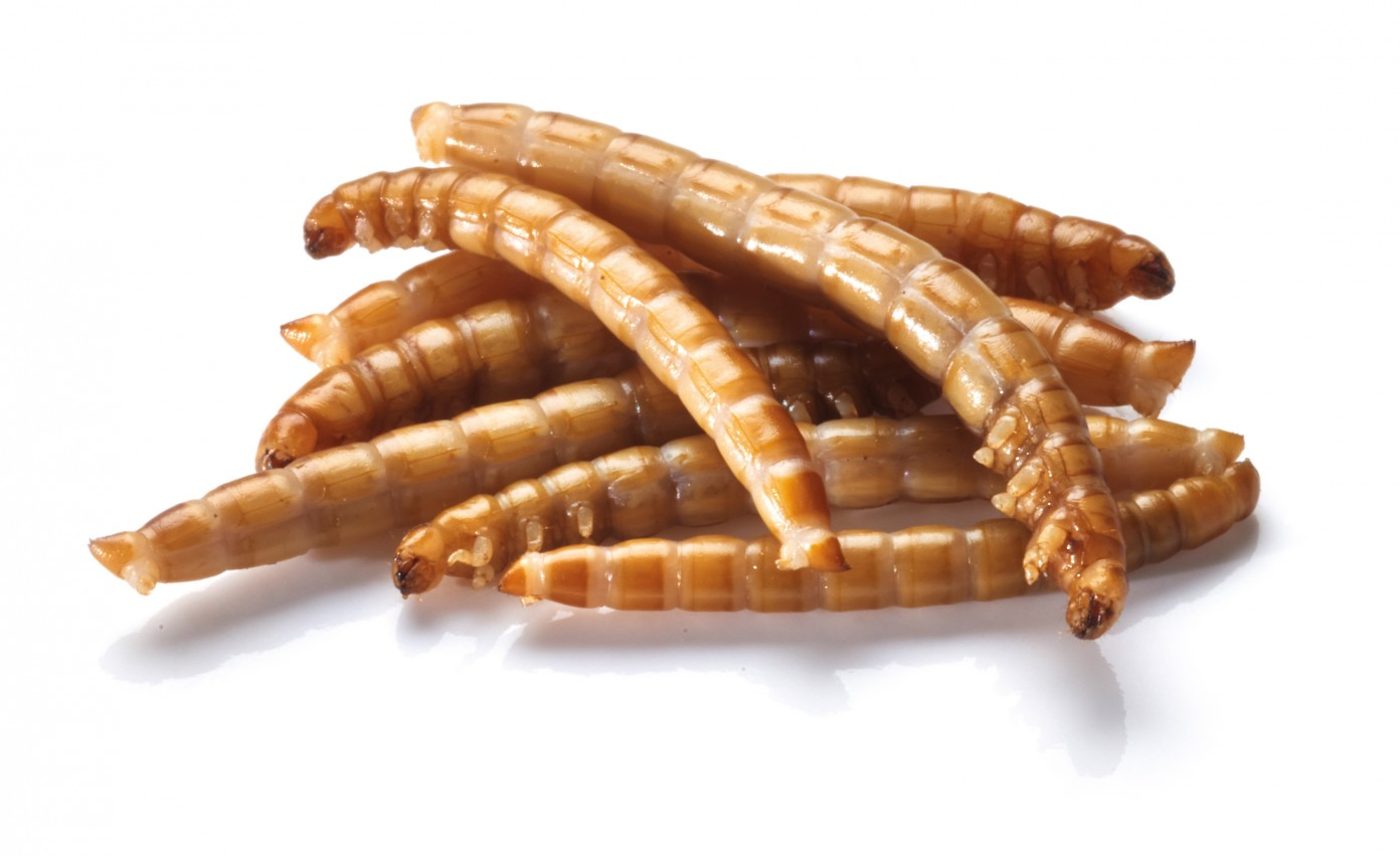 Meelwormen.jpg
