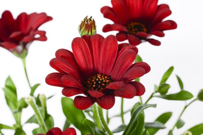 Decock-plants-studio_4091.jpg