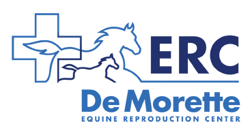 ERC_De_Morette.png