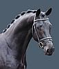 boeve_paardenhouderij.png