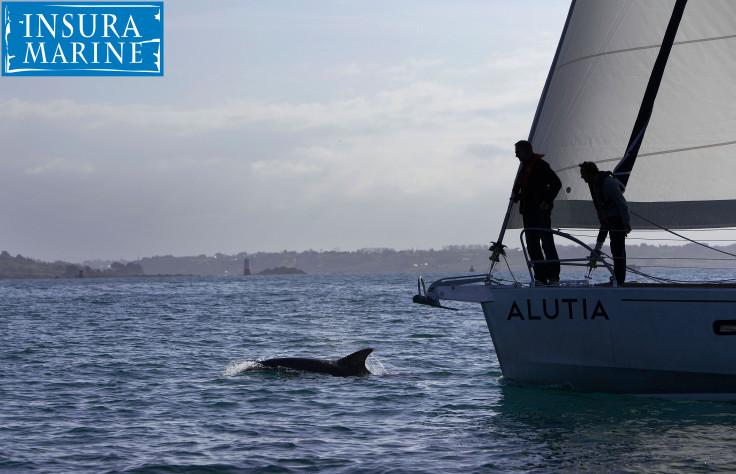 Aluta-watermarked.jpg