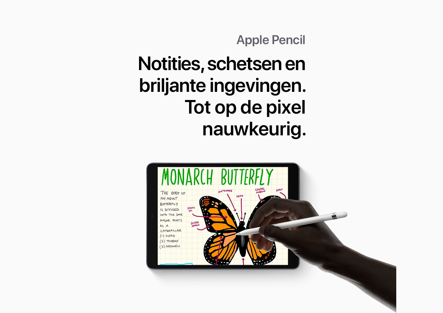 Productpage---iPad-Air-2019-nl-mobile_09.jpg