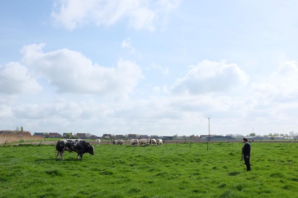 Wit-Blauw Vleesbedrijf 1.jpg