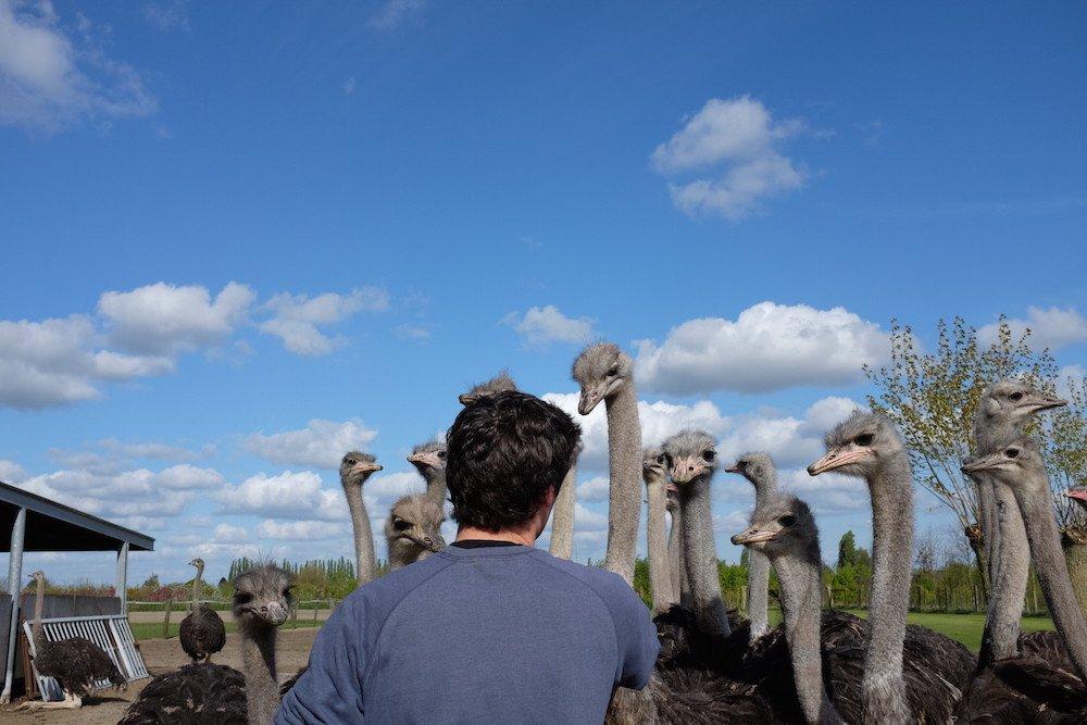 Struisvogelboerderij Schobbejaks Hoogte 6.jpg