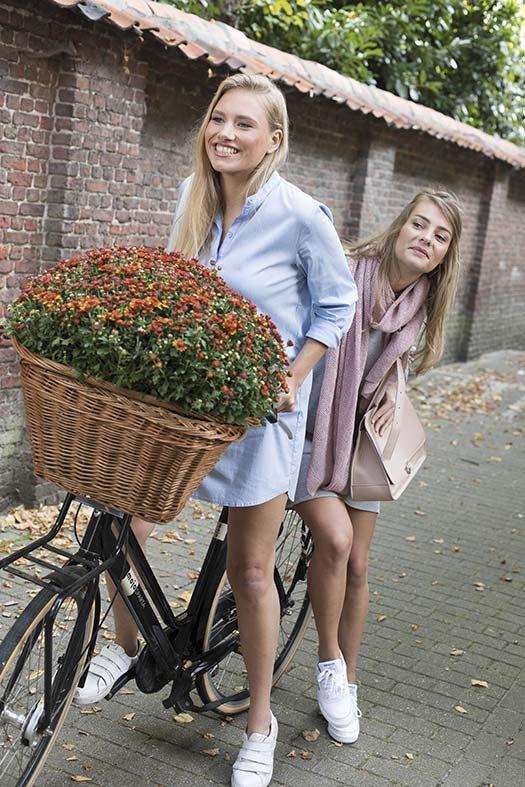 Belgian Mums 12.jpg