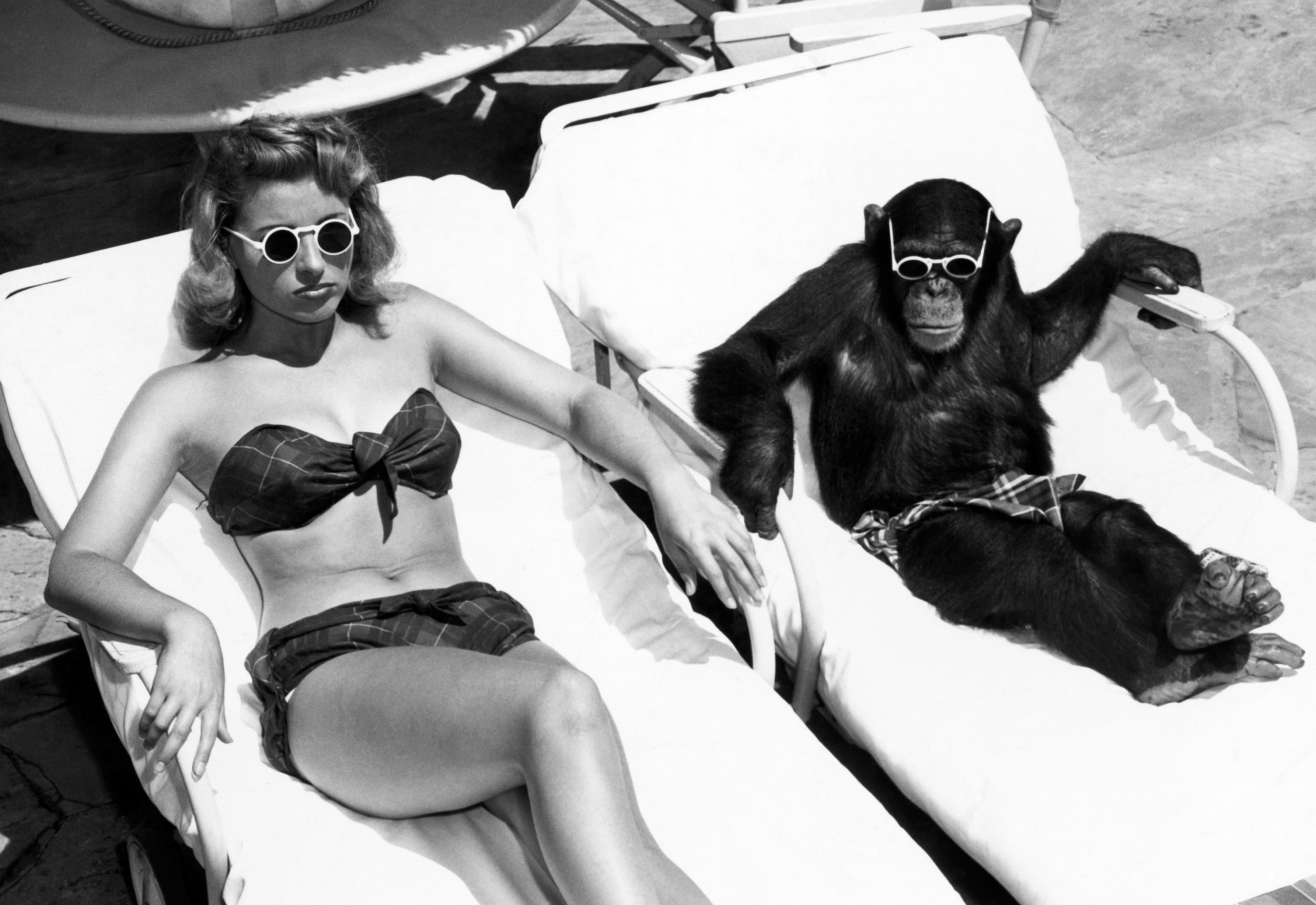 Aap en vrouw in een ligstoel