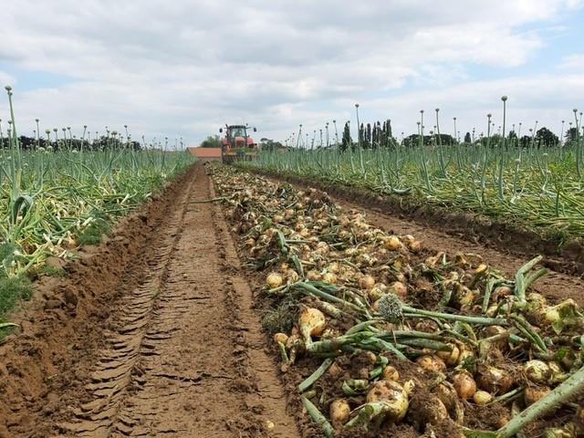 oogst2.jpg