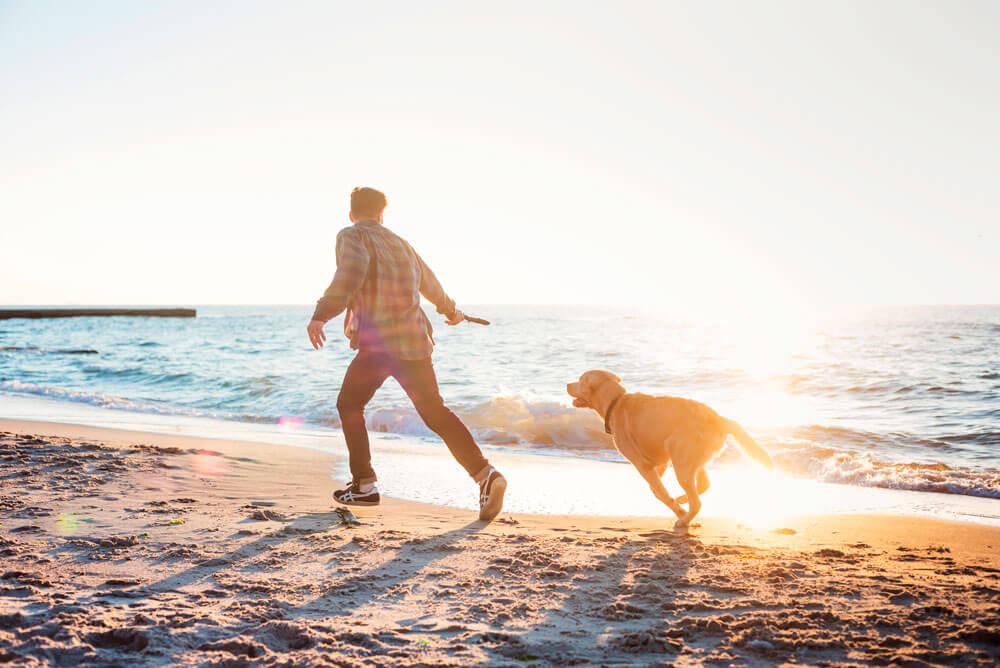 Zeeparken-met-de-hond-naar-zee3.jpg