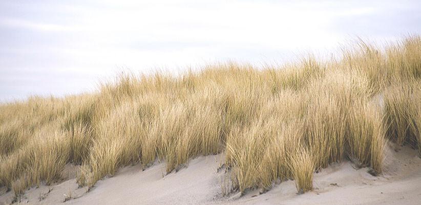 zeeparken-blog-vakantiehuis-duinen.jpg